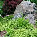 Rock Garden by Barbara S Nickerson