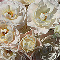 Romantic White Roses by Carol Groenen