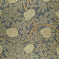 Rose by William Morris