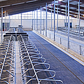 Row Of Cattle Cubicles by Jaak Nilson