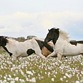 Running Horses by Gigja Einarsdottir