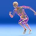 Running Skeleton In Body, Artwork by Roger Harris