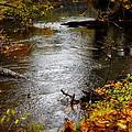 Running Water by Scott Hovind