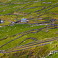 Rural Landscape On Dingle Peninsula by Gabriela Insuratelu