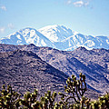 San Gorgonio Mountains by Linda Dunn