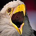 Screaming Eagle I by Bill Dodsworth