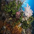 Sea Fan On Soft Coral In Raja Ampat by Todd Winner