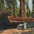 Sequoia National Park by Granger