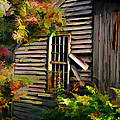 Shed by Suni Roveto