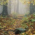Shenandoah National Park In Virginia by Bilderbuch
