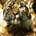 Siberian Tiger by Victor Habbick Visions
