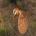 Silent Hunter by Beth Sargent