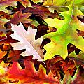 Simple Background From Autumn Leaves by Aleksandr Volkov