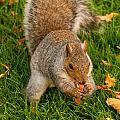 Snack Time by Paul Mangold