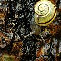 Snail, Pointe-des-cascades, Quebec by Steeve Marcoux
