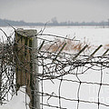 Snow Fence  by Sandra Cunningham