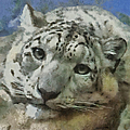 Snow Leopard Painterly by Ernie Echols
