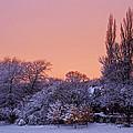 Snow Scene At Sunrise by David Pringle