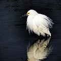Snowy Egret  by Saija  Lehtonen