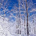 Snowy Path by Rob Travis