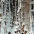 Snowy Woods by Deborah M Rinaldi