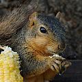 So Much Sweet Corn So Little Time by Lori Tordsen