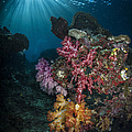 Soft Coral And Sunburst In Raja Ampat by Todd Winner