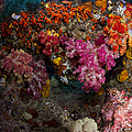 Soft Coral In Raja Ampat, Indonesia by Todd Winner