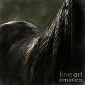 Soft Shapes by Angel Ciesniarska