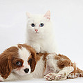 Spaniel Puppy And Kitten by Mark Taylor
