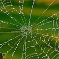 Spiderweb With Dew Drops by Werner Lehmann