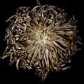 Spiky Flower by Nathaniel Kolby