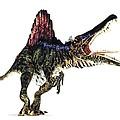 Spinosaurus Dinosaur, Artwork by Animate4.comscience Photo Libary