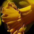 Splash Of Yellow by Karen Harrison