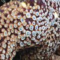 Spotted Starfish by DLynne Warren