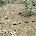 Spring Flood, Nicola River, Canada by Kaj R. Svensson