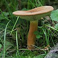 Spring Mushroom by Mike Lytle