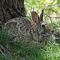 Spring Time Rabbit by Lori Tordsen