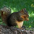 Squirrel Eating by Lori Tordsen