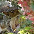 Squirrel In Fall by Valia Bradshaw
