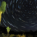 Star Trails In Joshua Tree by Dung Ma