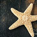Starfish by Darren Fisher