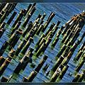 Stumps by Blake Richards