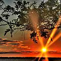 Summers Breeze Sunsets Through Tress by Michael Frank Jr