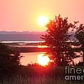 Sunset Ambience by Ronald Tseng
