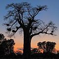 Sunset Baobab by Scott and Rebecca Rothney