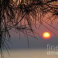 Sunset In Zanzibar by Alan Clifford
