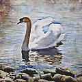 Swan by Joana Kruse
