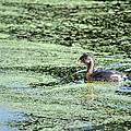 Swimming Along by Teresa Blanton