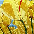 Tender Tulips by Debi Singer